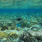 Bautismo de buceo Islas Cíes
