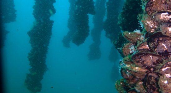 Bateas - Salidas con inmersión en la Ría de Vigo