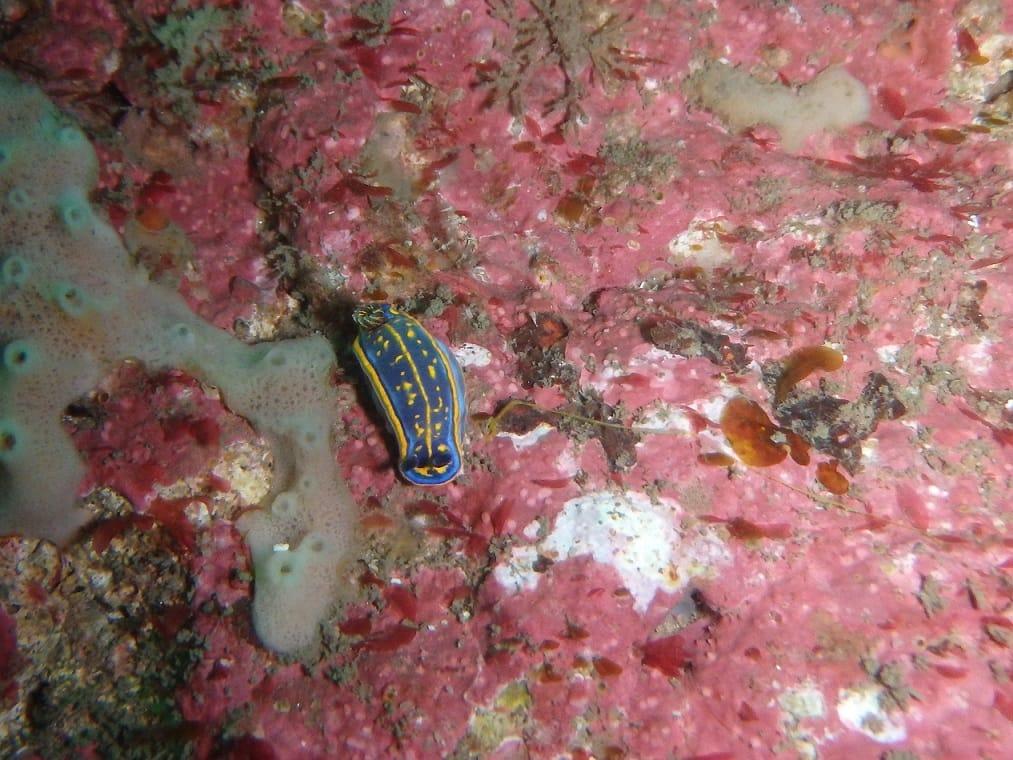 Islas Cíes Submarinismo