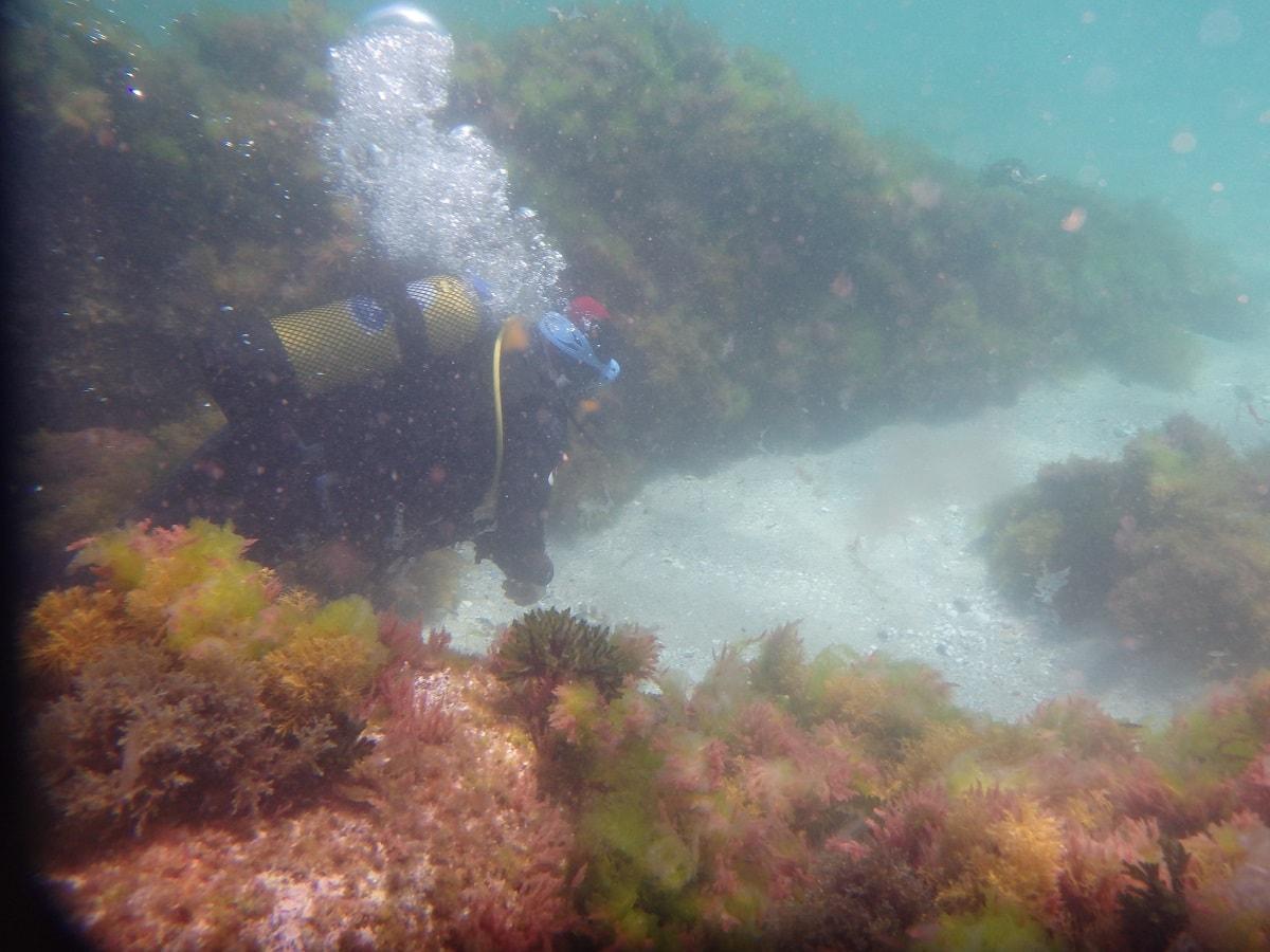 Bautismos de buceo en las Islas Cíes