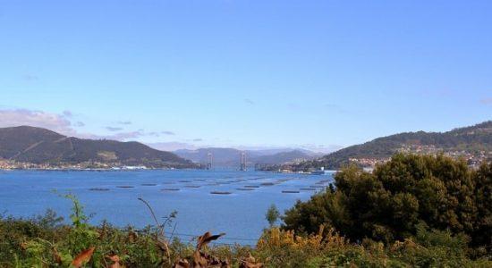 Buceo en la Ría de Vigo - OlaSalada