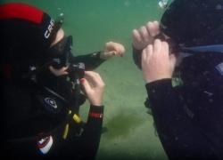 Buceo en Vigo:Clases,cursos y viajes.¡Cómo pez en el agua!